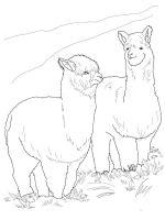 Alpaca-coloring-pages-7