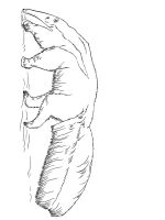 Anteater-coloring-pages-15