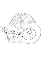 Anteater-coloring-pages-16