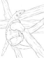 Anteater-coloring-pages-20