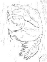 Anteater-coloring-pages-22