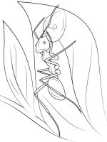 Ants-coloring-pages-13