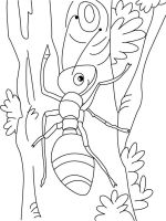 Ants-coloring-pages-15