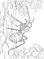 Ants-coloring-pages-18