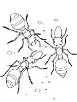 Ants-coloring-pages-19