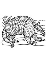 Armadillos-coloring-pages-11