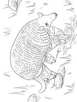 Armadillos-coloring-pages-13
