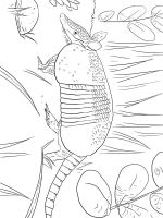 Armadillos-coloring-pages-14