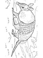 Armadillos-coloring-pages-2