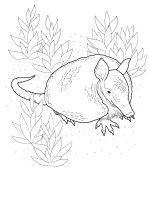 Armadillos-coloring-pages-4