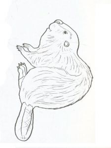 Beaver-animal-coloring-pages-337
