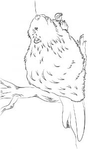 Beaver-animal-coloring-pages-341