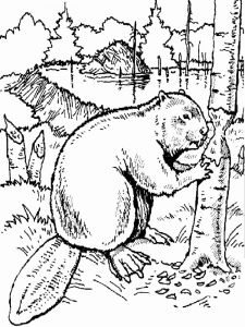 Beaver-animal-coloring-pages-343