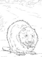 Beaver-animal-coloring-pages-345