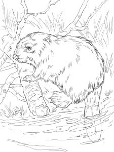 Beaver-animal-coloring-pages-346