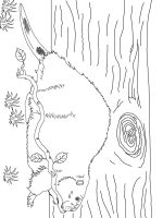 Beaver-animal-coloring-pages-347