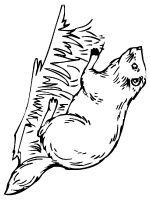 Beaver-animal-coloring-pages-348