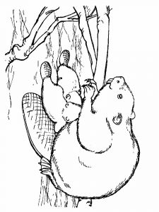 Beaver-animal-coloring-pages-349