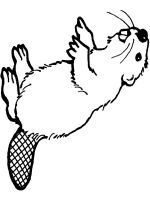 Beaver-animal-coloring-pages-351