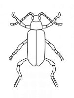 Beetles-coloring-pages-1