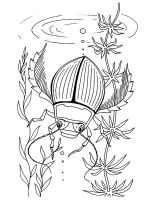 Beetles-coloring-pages-11