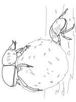 Beetles-coloring-pages-12