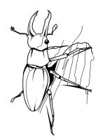 Beetles-coloring-pages-14