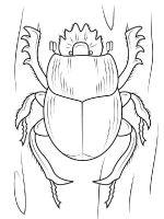 Beetles-coloring-pages-15