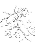 Beetles-coloring-pages-17
