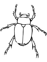Beetles-coloring-pages-18