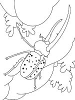 Beetles-coloring-pages-2