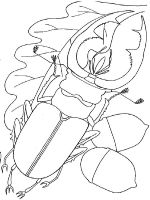 Beetles-coloring-pages-5