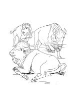 bison-coloring-pages-1