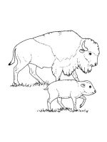 bison-coloring-pages-17
