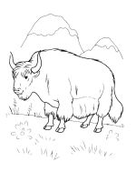 bison-coloring-pages-22
