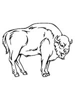 bison-coloring-pages-23