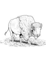 bison-coloring-pages-24