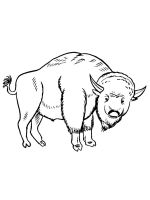 bison-coloring-pages-25