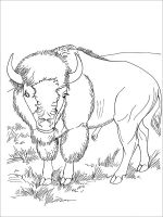 bison-coloring-pages-26