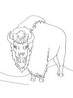 bison-coloring-pages-6