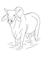 bull-coloring-pages-26