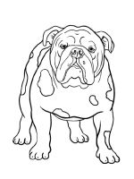 Bulldog-coloring-pages-1