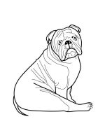 Bulldog-coloring-pages-2