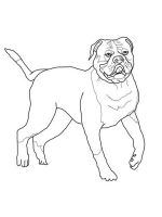 Bulldog-coloring-pages-3