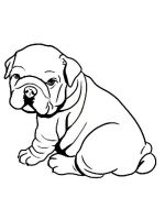 Bulldog-coloring-pages-4