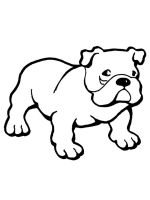 Bulldog-coloring-pages-5