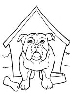 Bulldog-coloring-pages-6