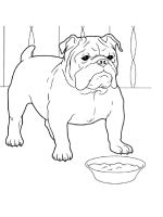 Bulldog-coloring-pages-8