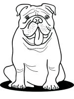 Bulldog-coloring-pages-9