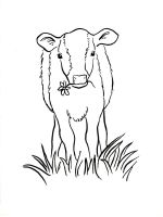 Calf-coloring-pages-10